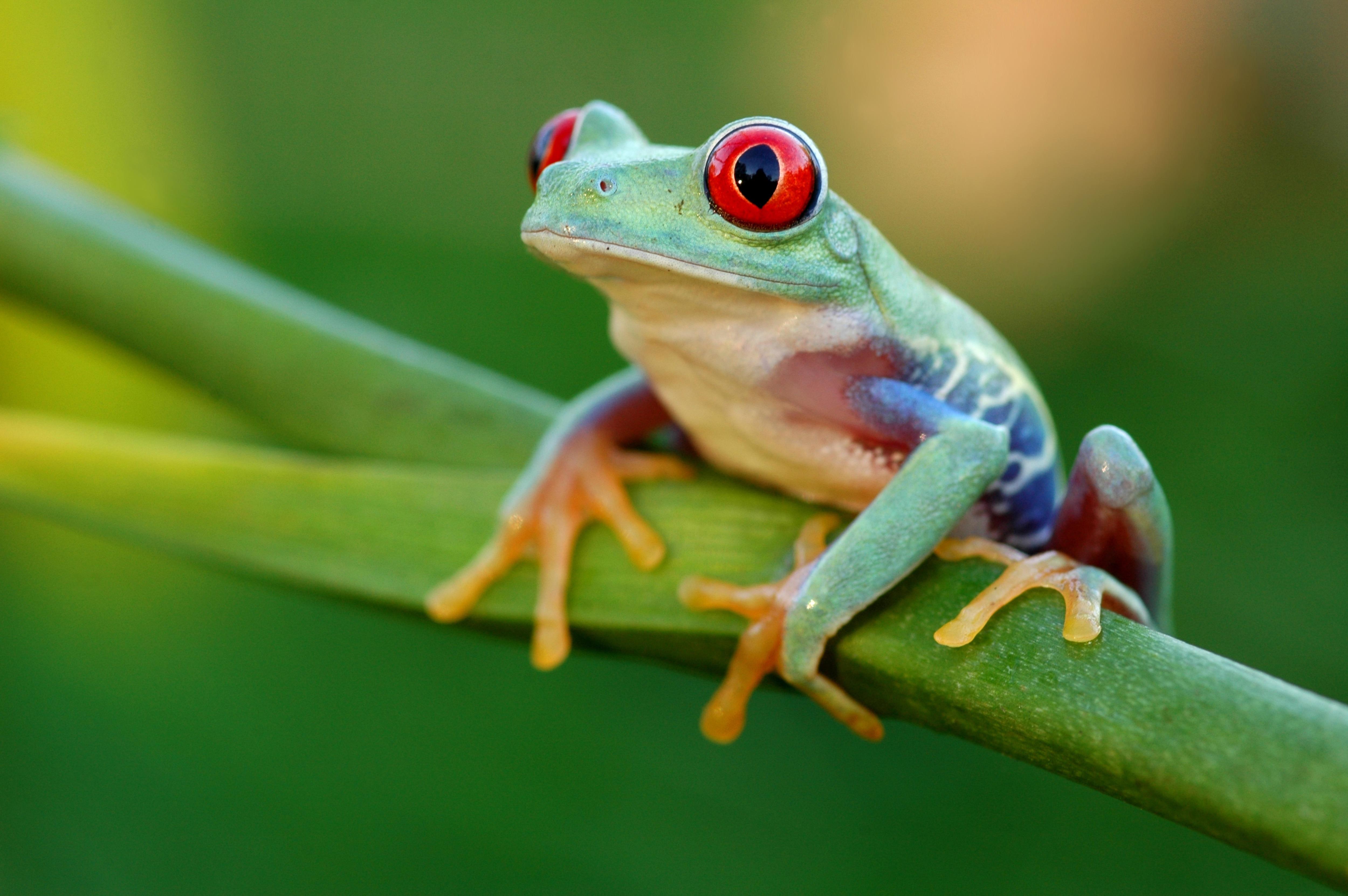 Frog's Metamorphosis