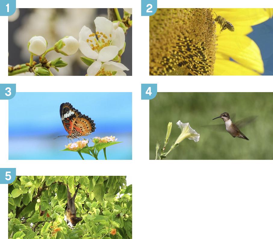 Plants And Pollinators Wedo 2 0 Science Lesson Plans Lego